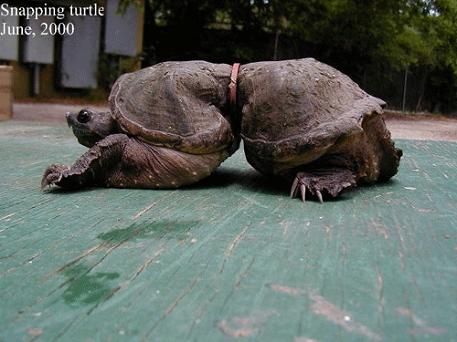Sumber : http://4.bp.blogspot.com/-xiwIeBMD2oA/ULzq_T2TE1I/AAAAAAAAAtc/4TZOT0pWyXw/s1600/turtleplastic.png
